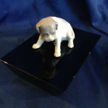 Gerbruder Bulldog Puppy