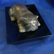 small stone lying bulldog