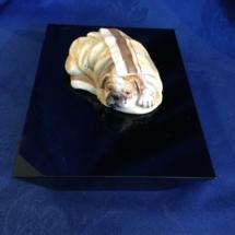Small lying Bulldog cute piece