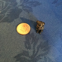 tiny bronze Vienna bulldog