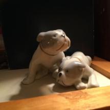 Unmarked puppy pair