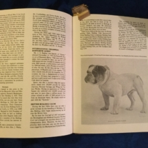 Colourful and descriptive bulldog book