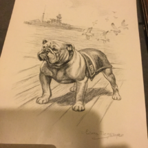 Bulldog sketch