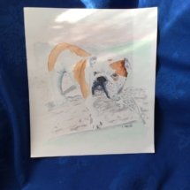 Bulldog Water Colour