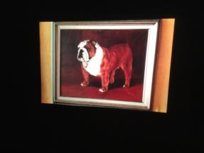 USA bulldog