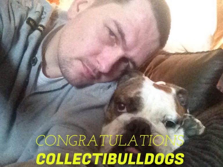 1sr Collectibulldogs