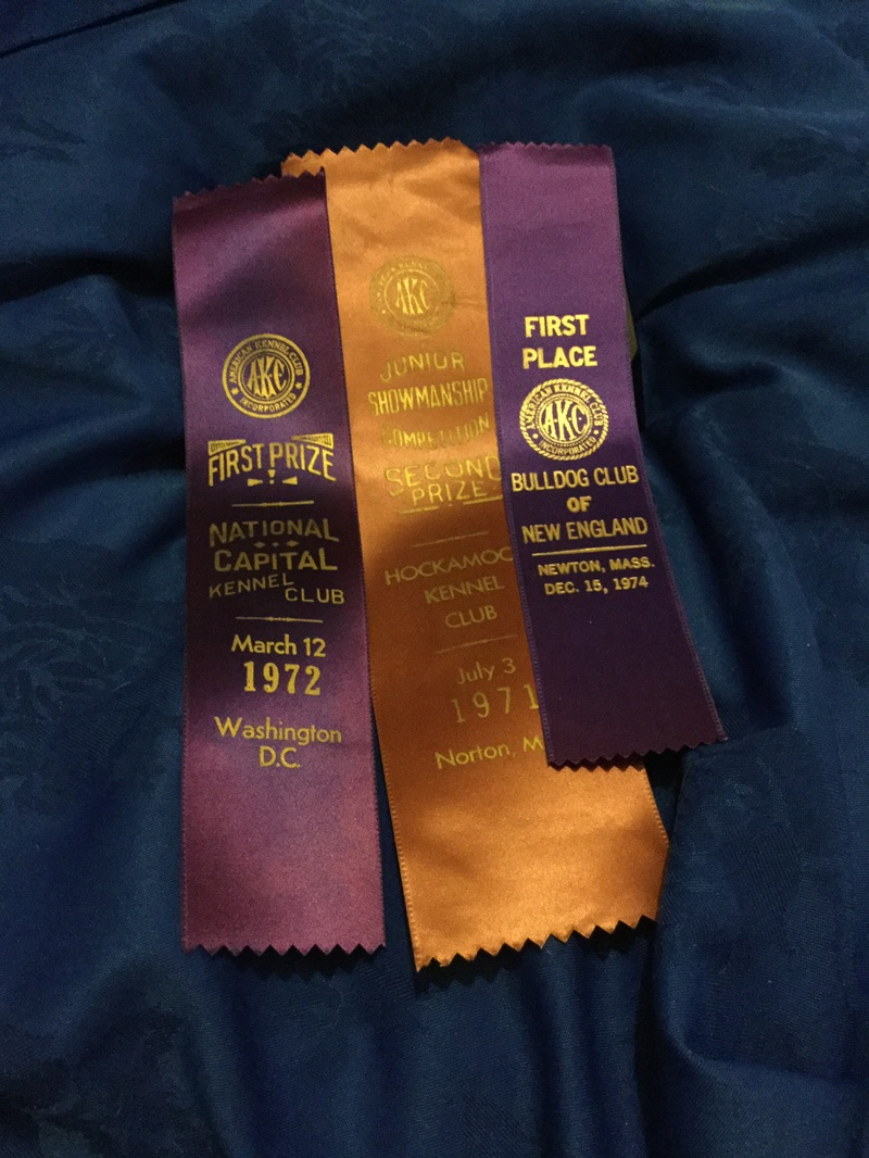 Assorted American bulldog show ribbons