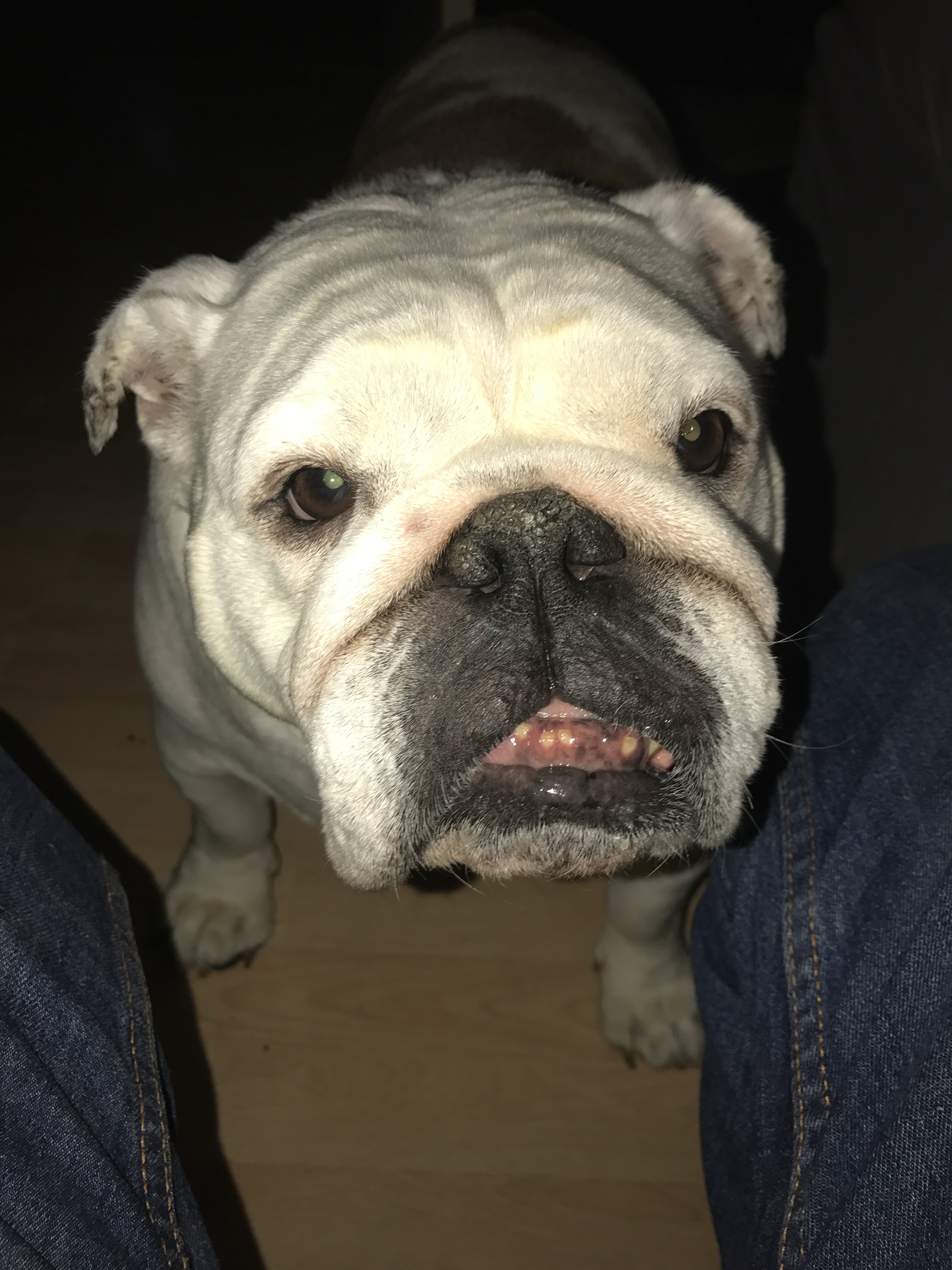 Bulldog antiques on YouTube