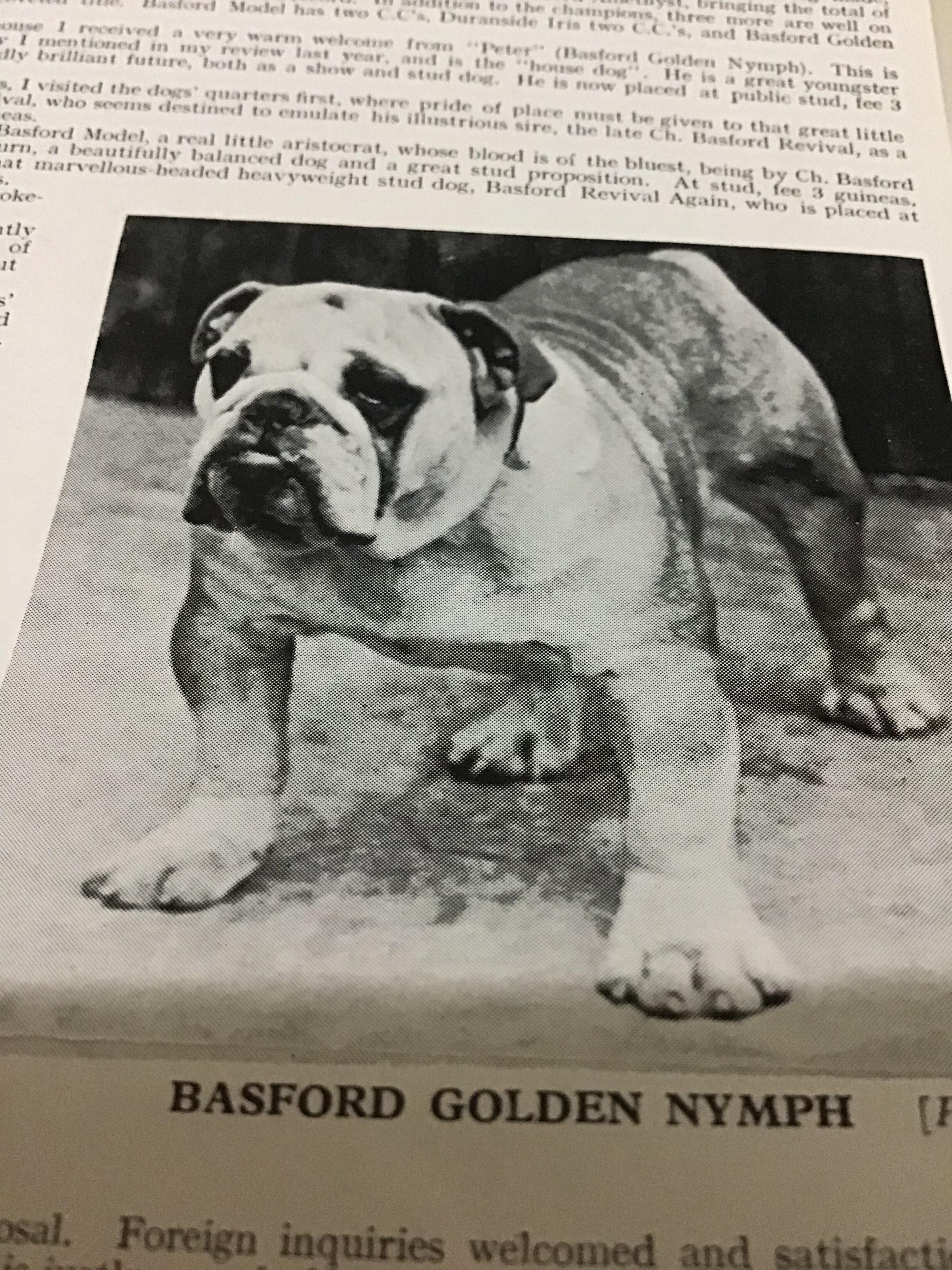 Basford Bulldog champions