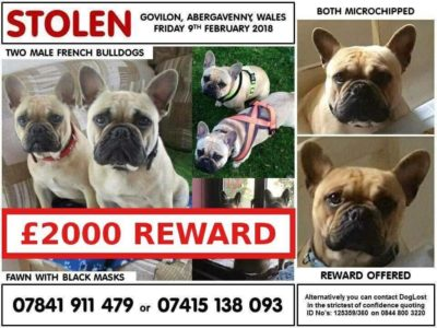 Stolen dogs Broken hearts